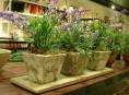 imagen Trucos para cuidar tus plantas artificiales