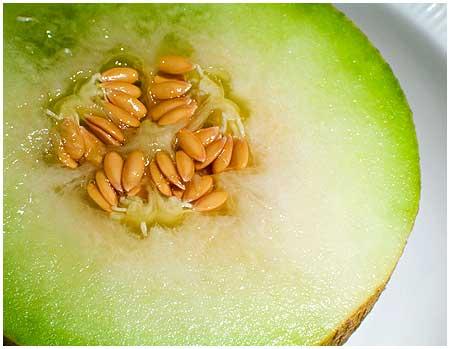 Aprende a plantar melones