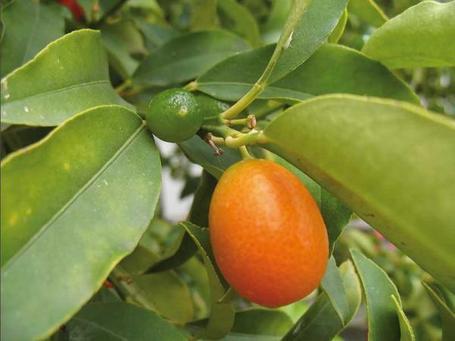 Arbutos el naranjo enano – Segunda Parte