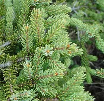 Aprende a reciclar tu árbol de navidad1
