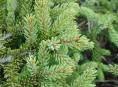 imagen Aprende a reciclar tu árbol de navidad