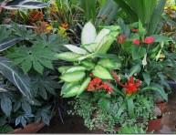 imagen Plagas y enfermedades mas comunes de las plantas de interior