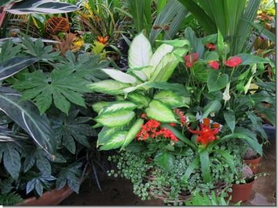 Plagas y enfermedades mas comunes de las plantas de interior