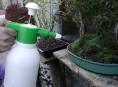 imagen Aprende más sobre el riego del Bonsai