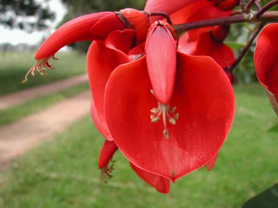 Rboles con flores el ceibo for Vivero el ceibo