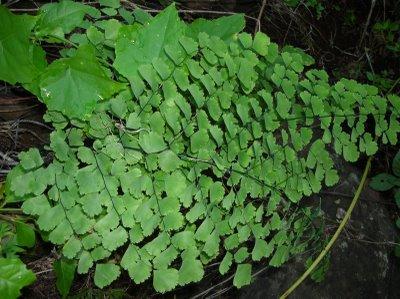 Plantas de interior_ Culandrillo-03