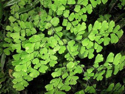 Plantas de interior_ Culandrillo-04