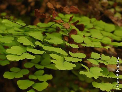Plantas de interior_ Culandrillo-05