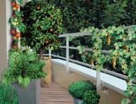 imagen Arma una pequeña y variada huerta en el balcón