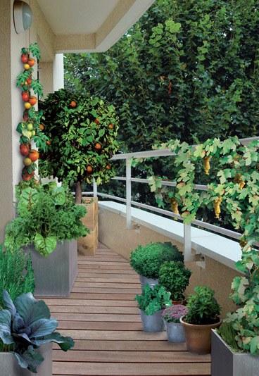 Arma una pequeña y variada huerta en el balcón