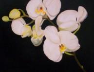 imagen Plantas de Interior con flor: la Orquídea