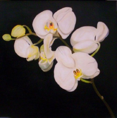 Plantas De Interior Con Flor La Orquidea - Plantas-interior-con-flor