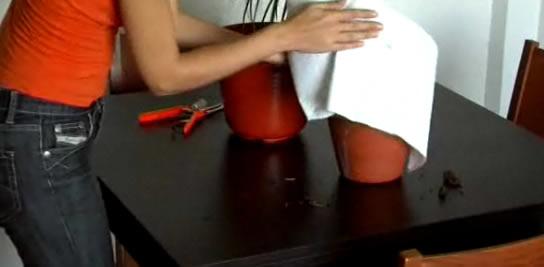 Aprende a revivir una planta que se ha podrido por exceso de agua