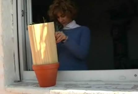 Protege del viento a las plantas
