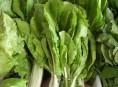 imagen Aprende a cultivar acelgas