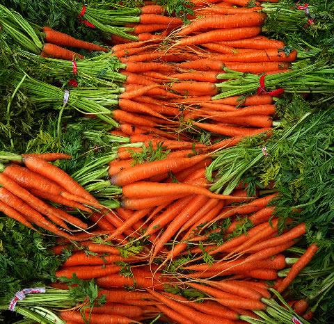 Cultiva zanahorias en casa1