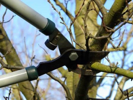 Aprende a podar un árbol frutal