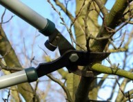 imagen Aprende a podar un árbol frutal