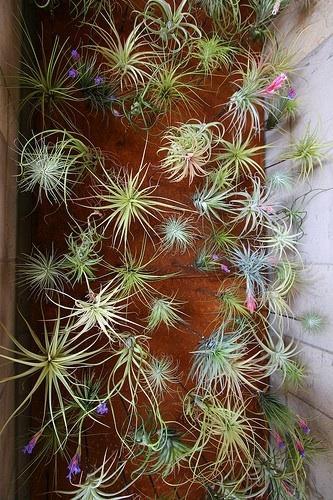 jardines verticales 01