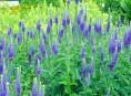 imagen 20 perennes que adornarán tu jardín