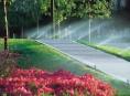 imagen Construir un jardín (VI)