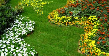 Clasificaci n de las plantas de jard n for Plantas para decorar jardines