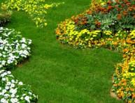 imagen Clasificación de las plantas de jardín