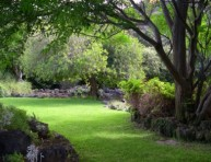 imagen Construir un jardín (IV)