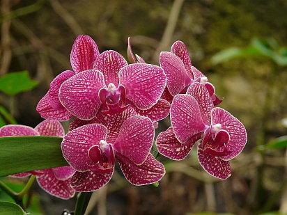 Cultivar orqu deas for Plantas ornamentales del ecuador