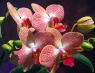 imagen Cultivar orquídeas