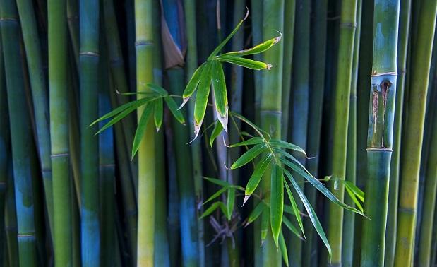 Cultivo de bamb para interiores - Canas de bambu decoracion exterior ...