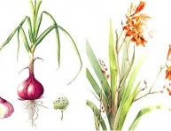 imagen Pasión por el arte botánico, la historia de Elaine Searle