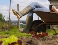 imagen Herramientas de jardín que debes tener – Segunda Parte