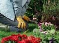 imagen Herramientas de jardín que debes tener – Primera Parte