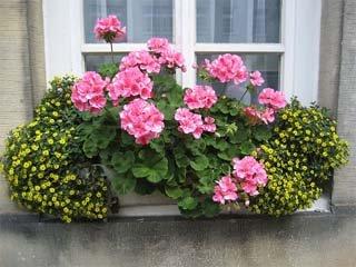 Un mini jard n durante todo el a o for Plantas de balcon para todo el ano
