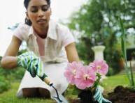imagen La jardinería, una terapia saludable