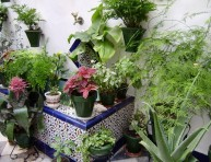 imagen Como mantener jardineras