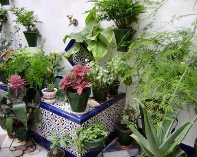Como mantener jardineras for Jardineras para patio casa
