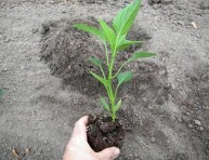 imagen Trasplante de plantas, consejos útiles