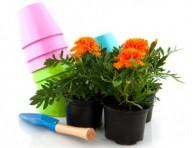 imagen Como cuidar las plantas en otoño