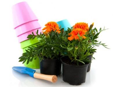 Como cuidar las plantas en otoño