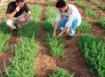 imagen Construir un jardín  (II)