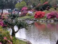 imagen Construir un jardín  (III)