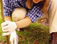 imagen Clima y cultivo de plantas (I)