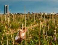 imagen El huerto de Montecarmelo