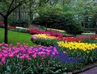 imagen Construir un jardín (V)