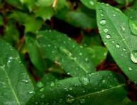 imagen Jardines de lluvia