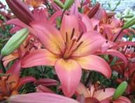 imagen Congreso en Brasil sobre Floricultura y Plantas Ornamentales