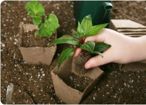 Trasplante de plantas consejos tiles gu a de jardiner a - Utiles de jardineria ...