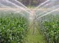 imagen Obtención de plantas nuevas mediante propagación vegetativa
